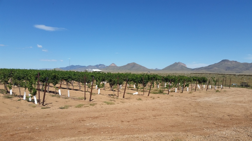 Escape to Sun-Drenched Sonoita for a Unique Wine Experience