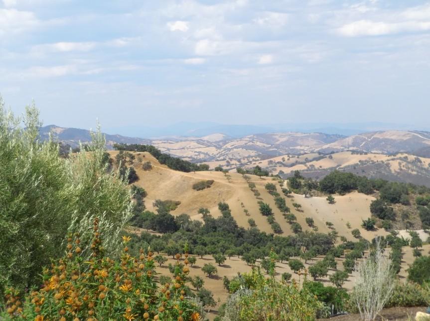 Paso Robles WineAdventure